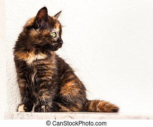 European young cat
