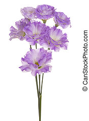 eustoma flower isolated