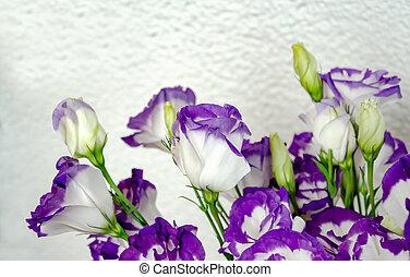 Eustoma white with blue trim