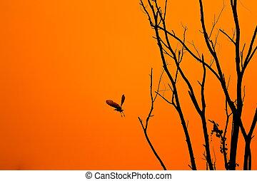 evening., árbol, pájaro