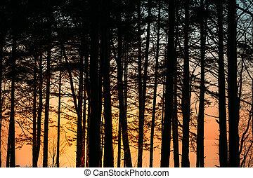 evening., φινλανδία , δέντρα , εναντίον , κόλπος