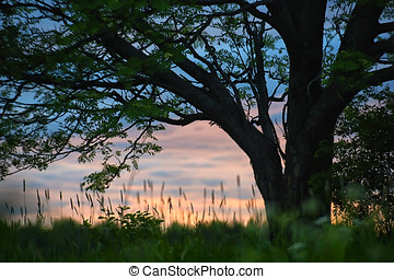 Evening and tree on the field of grass