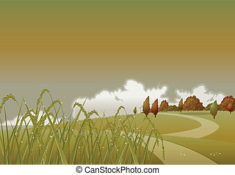 evening autumn wheat - autumn golden wheat on a background...