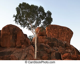 evening close up of a ghost gum and the devil's marbles in the northern territory at sunset