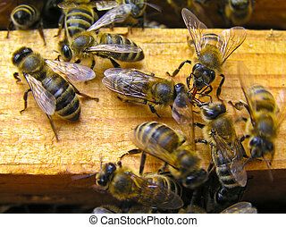 Evening conversations - In the summer the bees from the hive...