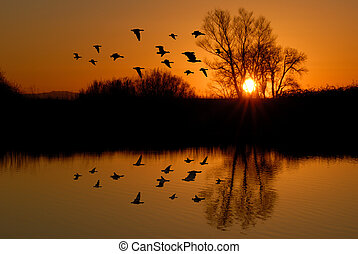 Reflection of Winter Evening Duck Flying over Wildlife Pond, San Joaquin Delta, California Flyway