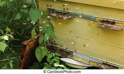 Interesting trajectory of bees to the hive shaded background.