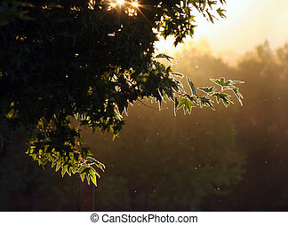 Evening forest - Sunset in a forest