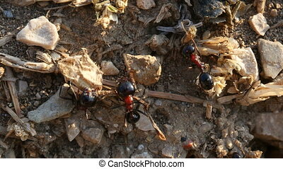 evening fuss in the anthill in the ground