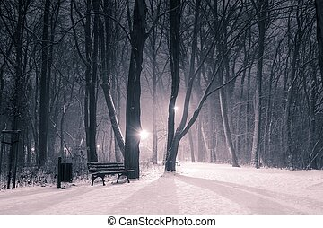 evening in the park in the winter
