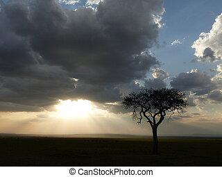 Evening in the savannah