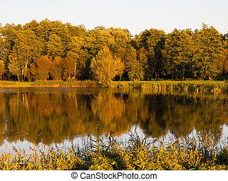 Evening lake reflection