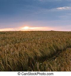 Evening landscape in summer