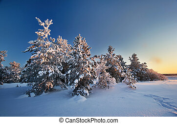 Evening landscape in winter