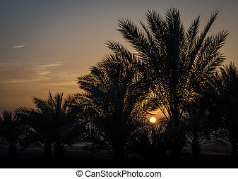 evening landscape sunset sun over the Red Sea among palm trees in Egypt