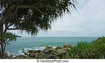 Evening landscape. The rocky coast of the tropical sea. On the rocks growing Pandan
