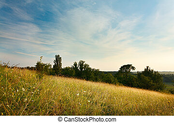 Evening Landscape with cirrus clouds, grasses and trees -...