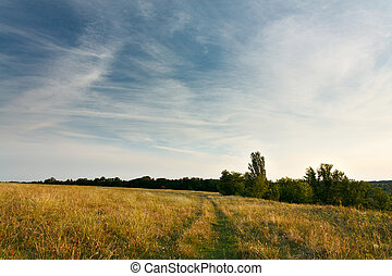 Evening landscape with cirrus clouds over field