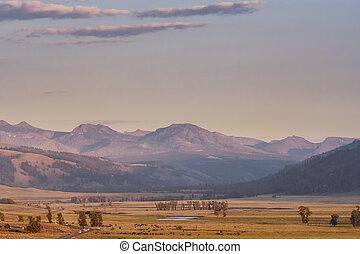 Evening Light In Hayden Valley in Yellowstone National Park