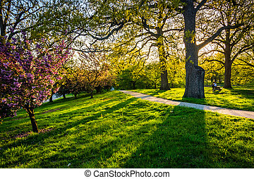 Evening light on colorful trees in Druid Hill Park,...