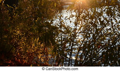 evening light on water and follage - evening light on lake...