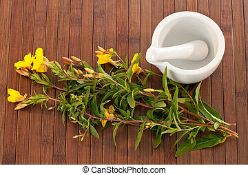Evening primroses with mortar and pestle over wooden background