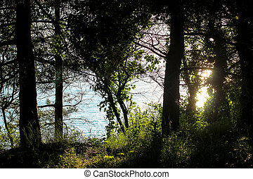 evening sun rays through the trees, trees in the sun, sunbeam through the trees, path in the Park