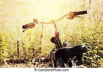 evening sunshine at wooden landscape and standing bicycle next to them