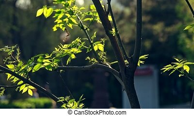 Evening time in the garden with tree leaves backlit slow...