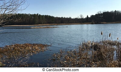 Evening tranquil scene, beautiful oncoming wave, shore on lake or pond, pine trees on the shore. Magic in nature. Outdoors.