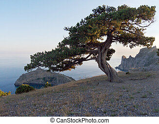 evening tree