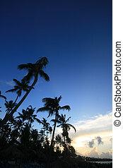 Evening tropics