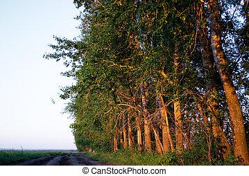 evening wood