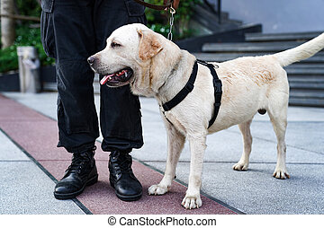 event., police, devoir, chien, conclusion, bombe