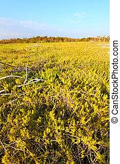 everglades , λειμών , ακτοπλοϊκός , τοπίο