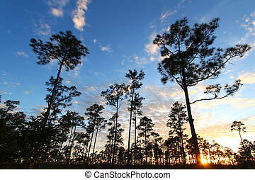 Everglades Forest Sunset