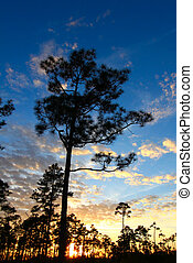 Everglades Forest Sunset - A beautiful sunset over a forest...