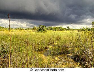 Everglades Landscape - 12