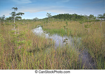 Everglades Landscape 5 - Beautiful scene of the Florida...