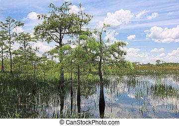 Everglades Landscape 8