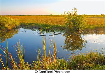 Everglades Landscape, Canal