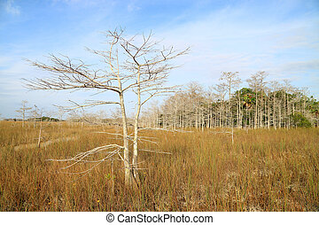 Everglades Landscape - Everglades Winter Landscape with a...