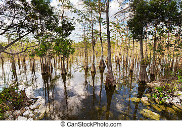 Everglades landscapes - Landscapes in Everglades National...