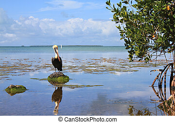 Everglades National Park, lake view and pelican in bird...