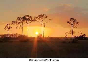 everglades, pôr do sol
