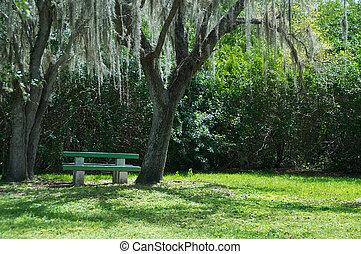 everglades, parque, vacío