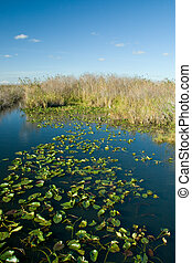 Everglades - Big chunk of water at the Everglades Park in...