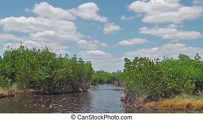 Everglades airboat tour POV in National Park, Florida in United States of America. Popular tourist destination to see typical vegetation and alligators.