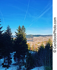 Evergreen coniferous trees on the top of mountain hills