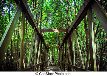 evergreen forest, bridge walk to tropical humid green forest